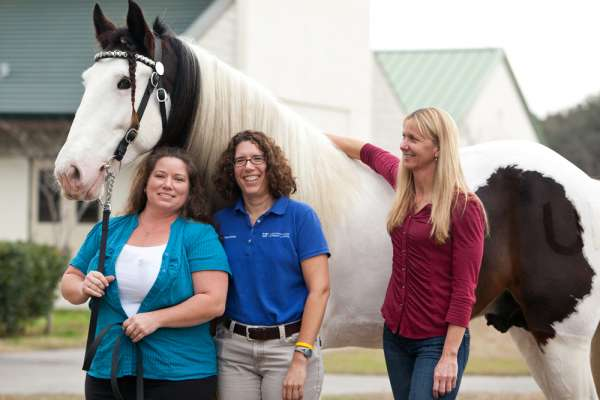 Mariah's Boon treated at UF Large Animal Hospital