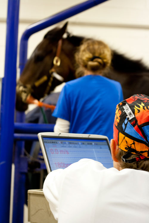 UF Equine Treadmill Cardiology
