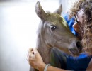 Sanchez and cocoa13 foal_8