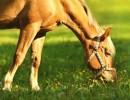 Spring Season & Your Horse