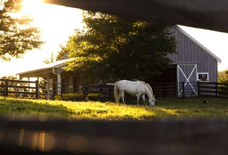 Summer Horse Pasture